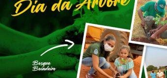 Ação de plantio de mudas e sementes de espécies nativas do cerrado em comemoração ao Dia da Árvore